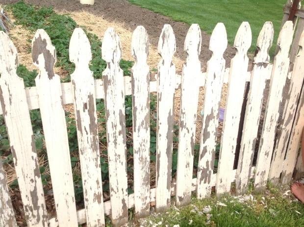 scraping the fence to prepare for painting